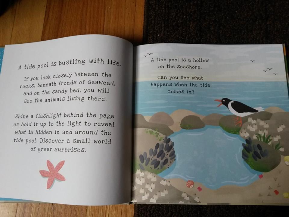Secrets of the Seashore2